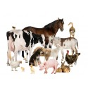 Livestock & Pets